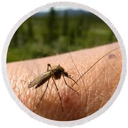 Blood Thirsty Mosquito On Human Arm Round Beach Towel