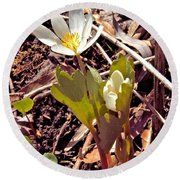 Bloodroot Reaching For The Spring Sun Round Beach Towel