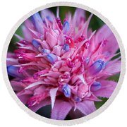Blooming Bromeliad Round Beach Towel