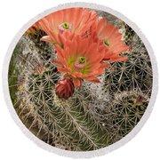 Blooming Cacti Round Beach Towel