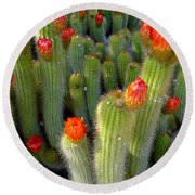 Blooming Cacti Round Beach Towel