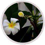 Blooming Frangipani Flower Alongside Bud Round Beach Towel