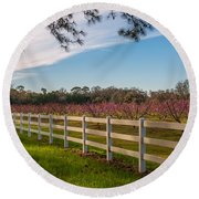 Blooming Peach Tree's At Boone Hall Round Beach Towel