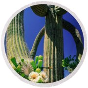 Blooming Saguaro Round Beach Towel