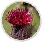 Blooming Spear Thistle Round Beach Towel
