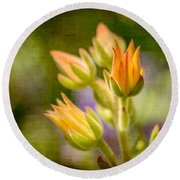 Blooming Succulents I Round Beach Towel