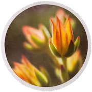 Blooming Succulents V Round Beach Towel