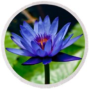 Blooming Water Lily Round Beach Towel