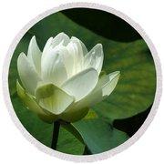 Blooming Lotus Bath Mat