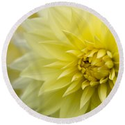 Blooming Yellow Petals Round Beach Towel