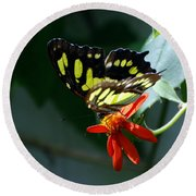Blooms And Butterfly7c Round Beach Towel