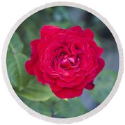 Blossoming Rose Round Beach Towel