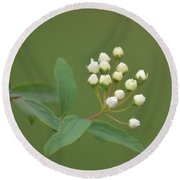 Blossoming Spirea Buds Round Beach Towel