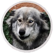 Blue And Brown Eyed Husky Round Beach Towel