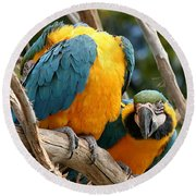 Blue And Gold Macaws Round Beach Towel
