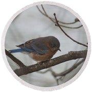 Blue Bird 201301 Round Beach Towel