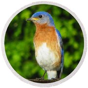 Blue Bird Round Beach Towel
