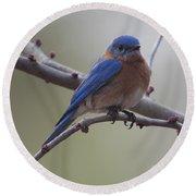 Blue Bird Of Happiness Round Beach Towel