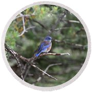 Blue Bird Perched Round Beach Towel