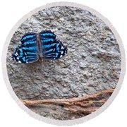 Blue Butterfly Myscelia Ethusa Art Prints Round Beach Towel