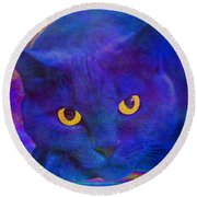 Blue Cat Ponders Round Beach Towel