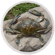 Blue Crab On The Rock Round Beach Towel