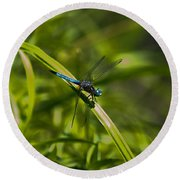 Blue Damsel Dragon Fly Round Beach Towel