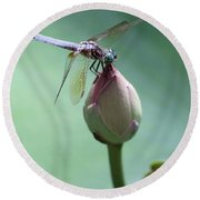 Blue Dragonflies Love Lotus Buds Round Beach Towel by Sabrina L Ryan