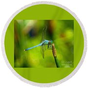 Blue Dragonfly 2 Round Beach Towel