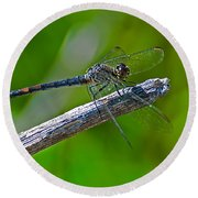 Blue Dragonfly 5 Round Beach Towel