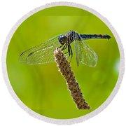 Blue Dragonfly 6 Round Beach Towel