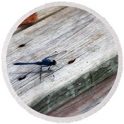 Blue Dragonfly Round Beach Towel
