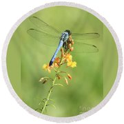 Blue Dragonfly On Yellow Flower Round Beach Towel