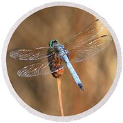 Blue Dragonfly Square Round Beach Towel