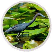 Reddish Egret Among The Lily Pads Round Beach Towel