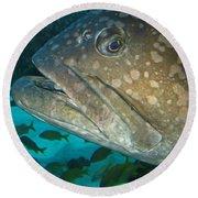 Blue-eyed Grouper Fish Round Beach Towel