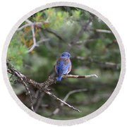 Blue Feathers Round Beach Towel