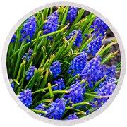 Blue Grape Hyacinth Round Beach Towel