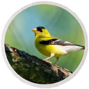 Blue Heart Goldfinch Round Beach Towel