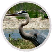 Blue Heron Round Beach Towel