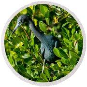 Blue Heron In Mangroves Round Beach Towel