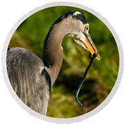 Blue Heron With A Snake In Its Bill Round Beach Towel