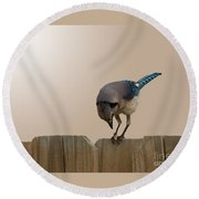 Blue Jay Eating Corn Round Beach Towel