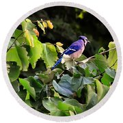 Blue Jay In A Tree Round Beach Towel