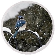 Blue Jay In Snow Storm Round Beach Towel