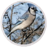 Blue Jay.. Round Beach Towel