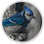 Blue Jay Painterly Round Beach Towel