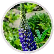 Blue Lupins Round Beach Towel