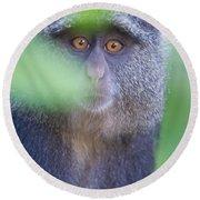 Blue Monkey Cercopithecus Mitis, Lake Round Beach Towel