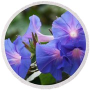 Blue Morning Glory Wildflowers - Convolvulaceae Round Beach Towel